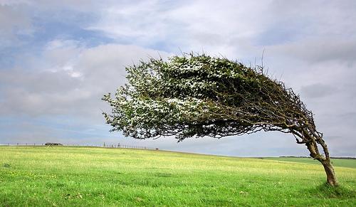 blowing-tree.jpg