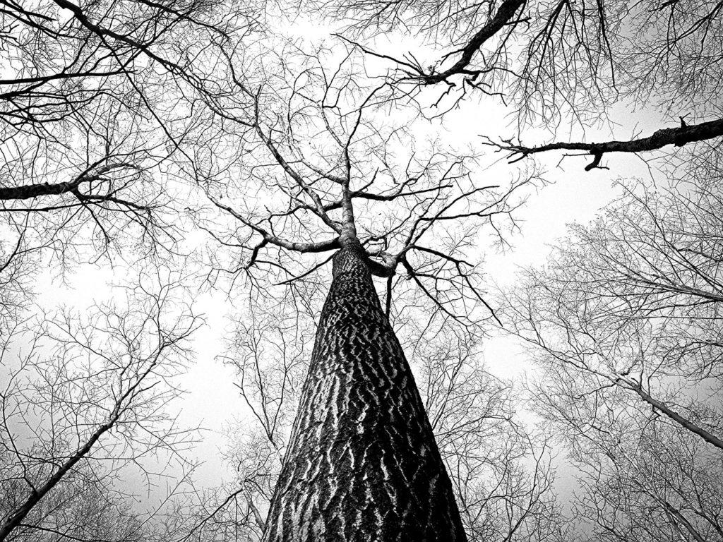 TreeBranches