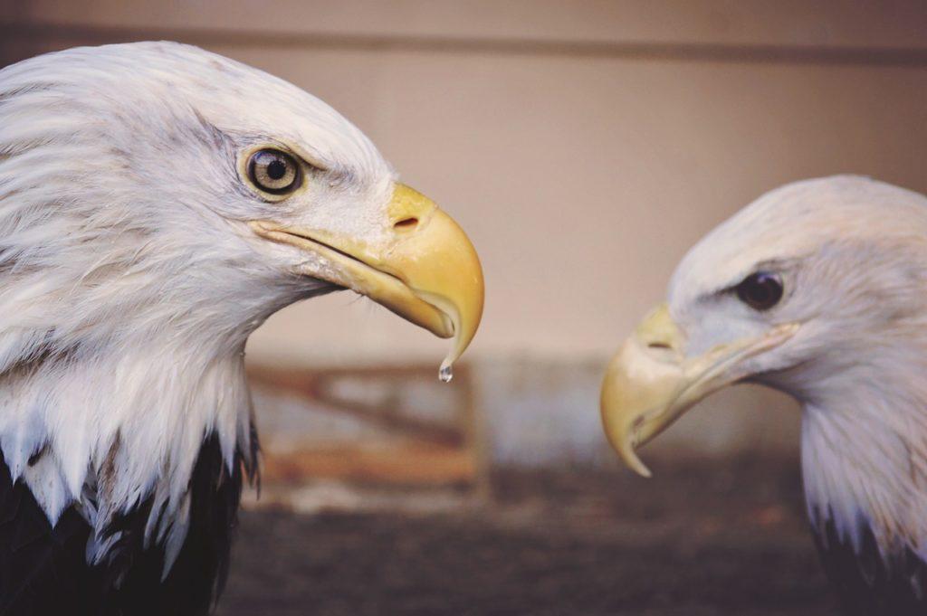 Autonomy Mastery Purpose with eagles